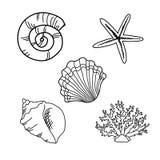 θαλασσινά κοχύλια που τίθενται Στοκ Εικόνα