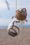 Θαλασσινά κοχύλια σε ένα βάζο στην παραλία, εκλεκτής ποιότητας ντεκόρ Στοκ Φωτογραφίες