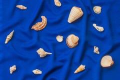 Θαλασσινά κοχύλια σε ένα μπλε υπόβαθρο Στοκ φωτογραφία με δικαίωμα ελεύθερης χρήσης