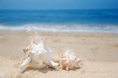 Θαλασσινά κοχύλια σε μια παραλία Στοκ φωτογραφίες με δικαίωμα ελεύθερης χρήσης