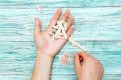 Θαλασσινά κοχύλια στα χέρια των γυναικών Στοκ φωτογραφία με δικαίωμα ελεύθερης χρήσης