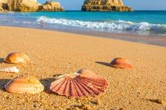 Θαλασσινά κοχύλια στην άμμο στην παραλία στο Αλγκάρβε, Πορτογαλία κλείστε επάνω Στοκ φωτογραφία με δικαίωμα ελεύθερης χρήσης