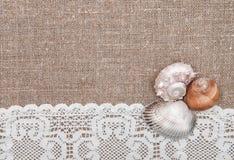 Θαλασσινά κοχύλια στο δαντελλωτός ύφασμα και burlap Στοκ εικόνα με δικαίωμα ελεύθερης χρήσης
