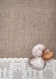 Θαλασσινά κοχύλια στο δαντελλωτός ύφασμα και burlap Στοκ εικόνες με δικαίωμα ελεύθερης χρήσης