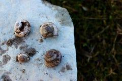 Θαλασσινά κοχύλια στο βράχο Στοκ Εικόνες