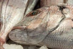 Θαλασσινά ψαριών ANS Στοκ Εικόνες