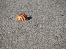 θαλασσινό κοχύλι άμμου ε& όμορφη κενή θερινή πετοσφαίριση παραλιών σφαιρών ανασκόπησης Στοκ Εικόνα
