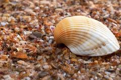 θαλασσινό κοχύλι άμμου υ& Στοκ Εικόνες
