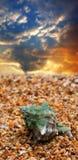 θαλασσινό κοχύλι άμμου Στοκ Εικόνες
