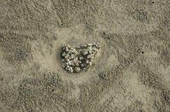 Θαλασσινό κοχύλι, βράχος, τρύπες καβουριών, παραλία άμμου Στοκ φωτογραφία με δικαίωμα ελεύθερης χρήσης