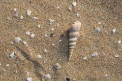 θαλασσινό κοχύλι και κοχύλι μαργαριταριών ` s Στοκ φωτογραφία με δικαίωμα ελεύθερης χρήσης