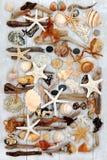 Θαλασσινό κοχύλι και ομορφιά Driftwood Στοκ εικόνες με δικαίωμα ελεύθερης χρήσης