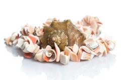Θαλασσινό κοχύλι και περιδέραιο Στοκ εικόνα με δικαίωμα ελεύθερης χρήσης