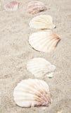 θαλασσινό κοχύλι μαργαρ&io Στοκ φωτογραφία με δικαίωμα ελεύθερης χρήσης
