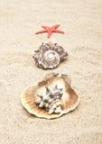 θαλασσινό κοχύλι μαργαρ&io Στοκ εικόνα με δικαίωμα ελεύθερης χρήσης