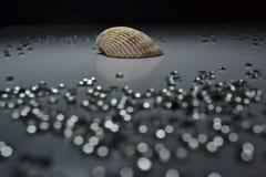 Θαλασσινό κοχύλι με το κρύσταλλο Bokeh Στοκ Φωτογραφίες