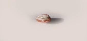 Θαλασσινό κοχύλι με το μικρό θαλασσινό κοχύλι μέσα Στοκ Εικόνα