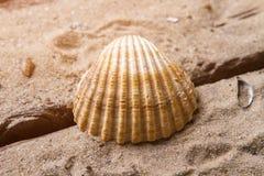 Θαλασσινό κοχύλι οστράκων στο υπόβαθρο άμμου Στοκ Εικόνες