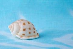 Θαλασσινό κοχύλι σε ένα τυρκουάζ υπόβαθρο ψαλιδίζοντας απομονωμένο λευκό κοχυλιών θάλασσας μονοπατιών Στοκ Φωτογραφίες