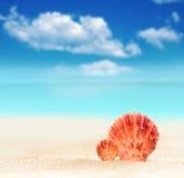 Θαλασσινό κοχύλι σε μια αμμώδη παραλία Στοκ φωτογραφία με δικαίωμα ελεύθερης χρήσης