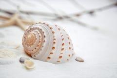 Θαλασσινό κοχύλι σε μια λεπτή άσπρη άμμο Στοκ φωτογραφία με δικαίωμα ελεύθερης χρήσης