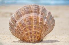 Θαλασσινό κοχύλι σε μια παραλία Στοκ Εικόνες