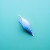 Θαλασσινό κοχύλι στα υπόβαθρα χρώματος κρητιδογραφιών Επίπεδος βάλτε Στοκ φωτογραφία με δικαίωμα ελεύθερης χρήσης