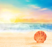 Θαλασσινό κοχύλι στην άμμο κοντά στη θάλασσα Στοκ φωτογραφίες με δικαίωμα ελεύθερης χρήσης