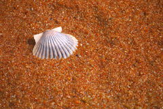 Θαλασσινό κοχύλι στην άμμο Στοκ φωτογραφία με δικαίωμα ελεύθερης χρήσης