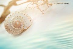 Θαλασσινό κοχύλι στην άσπρη άμμο θαλασσίως Στοκ Φωτογραφία