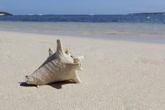 Θαλασσινό κοχύλι στην άσπρη παραλία Στοκ Εικόνες