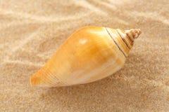 Θαλασσινό κοχύλι στην κυματιστή άμμο Στοκ φωτογραφία με δικαίωμα ελεύθερης χρήσης