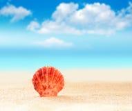 Θαλασσινό κοχύλι στην παραλία ενάντια στο μπλε ουρανό Στοκ φωτογραφίες με δικαίωμα ελεύθερης χρήσης