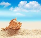 Θαλασσινό κοχύλι στην παραλία ενάντια στο μπλε ουρανό Στοκ φωτογραφία με δικαίωμα ελεύθερης χρήσης