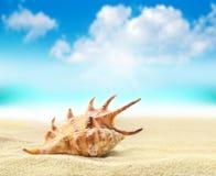 Θαλασσινό κοχύλι στην παραλία ενάντια στο μπλε ουρανό Στοκ Εικόνα