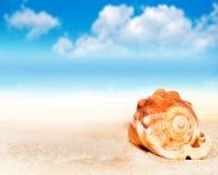 Θαλασσινό κοχύλι στην παραλία ενάντια στο μπλε ουρανό Στοκ Εικόνες