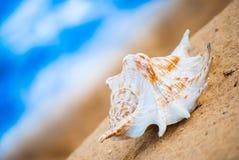 Θαλασσινό κοχύλι στην παραλία Στοκ φωτογραφίες με δικαίωμα ελεύθερης χρήσης