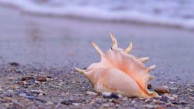 Θαλασσινό κοχύλι στην παραλία φιλμ μικρού μήκους