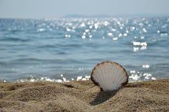 Θαλασσινό κοχύλι στην παραλία στοκ εικόνα με δικαίωμα ελεύθερης χρήσης