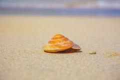 Θαλασσινό κοχύλι στην παραλία Στοκ Εικόνες