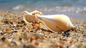 Θαλασσινό κοχύλι στην παραλία απόθεμα βίντεο