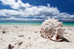 Θαλασσινό κοχύλι στην τροπική παραλία, Boracay Στοκ Φωτογραφίες