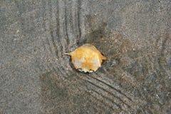 θαλασσινό κοχύλι Ταϊλάνδη άμμου παραλιών Στοκ Εικόνες