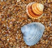 Θαλασσινό κοχύλι δύο στην άμμο στην ημέρα ήλιων Στοκ εικόνες με δικαίωμα ελεύθερης χρήσης