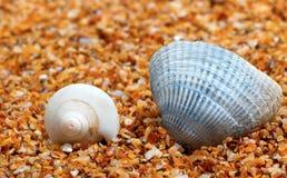 Θαλασσινό κοχύλι δύο στην άμμο Στοκ Εικόνα