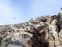 Θαλασσοπούλια Στοκ εικόνες με δικαίωμα ελεύθερης χρήσης