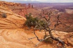 Θεαματικά τοπία του εθνικού πάρκου Canyonlands στη Γιούτα, ΗΠΑ στοκ φωτογραφία