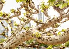 Θεαματική άποψη μέσω ενός δέντρου στους ουρανοξύστες στοκ φωτογραφία με δικαίωμα ελεύθερης χρήσης