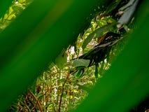 Θεαματική άποψη μιας όμορφης άγριας ζούγκλας στοκ εικόνες