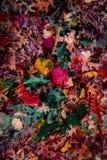 Θεαματική άποψη των φύλλων φθινοπώρου στοκ εικόνες